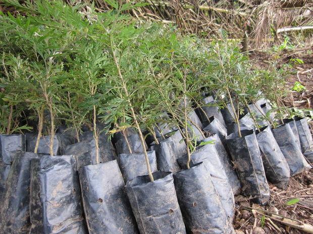 Soja en de strijd tegen ontbossing