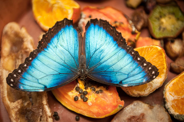 De Vlindertuin in Zoo Antwerpen opent opnieuw de deuren