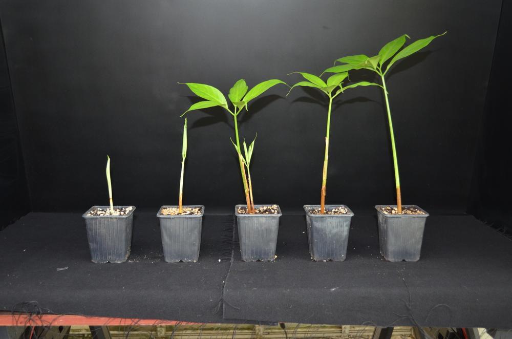 De jonge plantjes, Plantentuin Meise