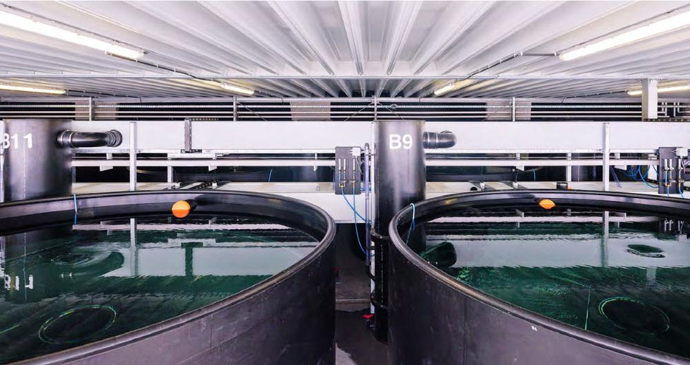Grootste aquaponische stadsboerderij van Europa geopend op dak van Foodmet in Anderlecht