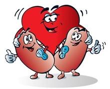 Nierfalen en hart- en vaatziekten