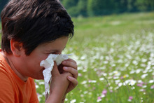 Stevenen we af op een heftig pollenseizoen?