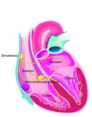Uw hartritme, regelmatig als een klok?