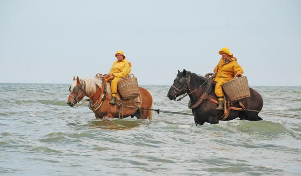 paard en erfgoed